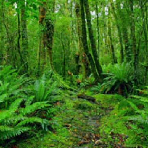 7 EXOTIC JUNGLE TREKS | GEDEPAHALA RAINFOREST, WEST JAVA